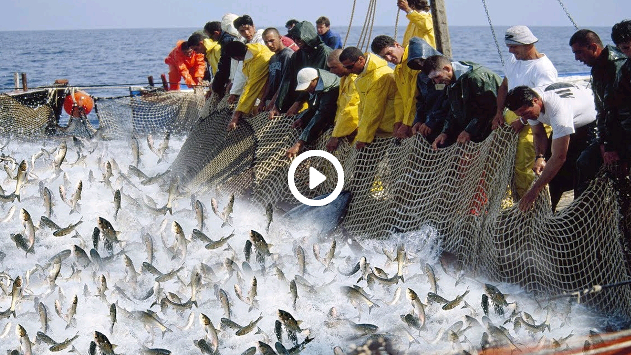 ভাইরাল ভিডিওতে দেখুন মাছ ধরার নতুন কৌশল